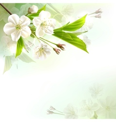 Blossoming tree branch with white flowers vector image vector image