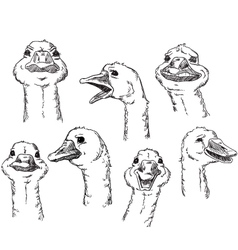 Goose with different facial expressions of a huma vector