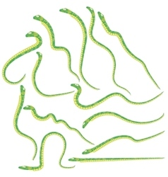 Green snakes set vector