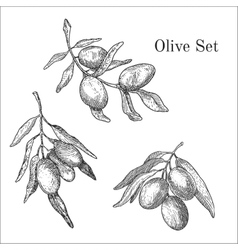 Ink hand drawn olive set vector