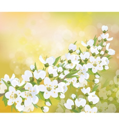 spring blossom branch vector image