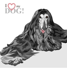 Domestic dog black afghan hound breed vector
