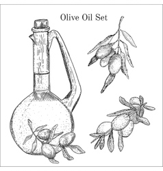 Ink hand drawn olive oil set vector