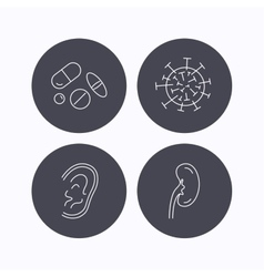 Medical pills virus and ear icons vector