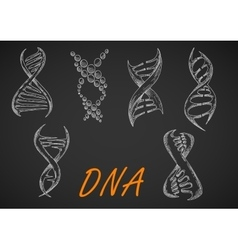 DNA helix models chalk sketches vector image vector image