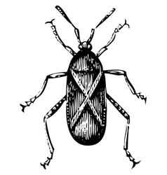 Squash bug vector image vector image