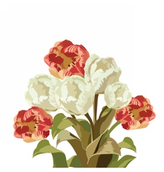 Red and White Tulips flowers vector image