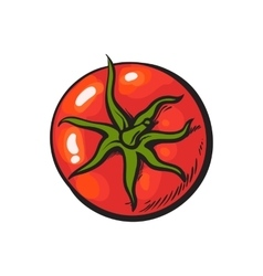 Sketch style drawing of shiny ripe red tomato top vector
