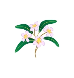 Flower plumeria icon cartoon style vector