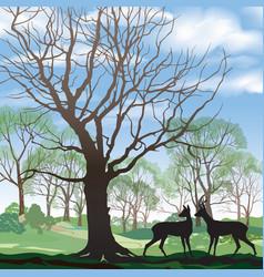 spring landscape with wild animal deer forest vector image