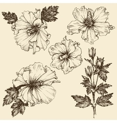 Hibiscus flower hand drawn floral set vector