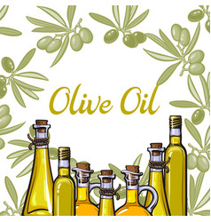 Banner label with olive branches oil bottles vector