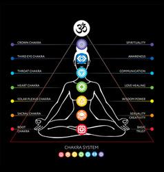 Chakras system of human body vector
