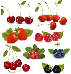 fresh berries vector image vector image