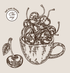 Hand drawn cherry in cup engraved vector