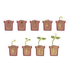 Plant seed growth development and rooting inside vector