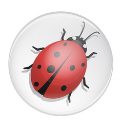 ladybug on a white background design vector image