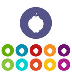 quince fruit set icons vector image