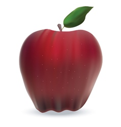 Apple isolated on white vector