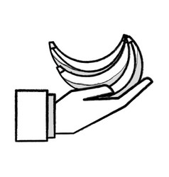 Organic banana fruit in the hand icon vector