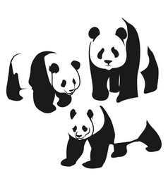 panda bear curious panda wildlife vector image