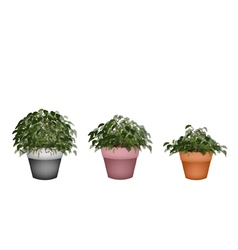 Three Beautiful Houseplant in Terracotta Pot vector image