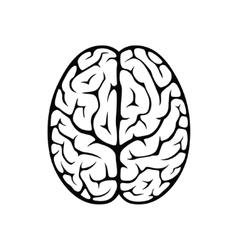 Brain top view vector