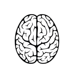 Brain top view vector