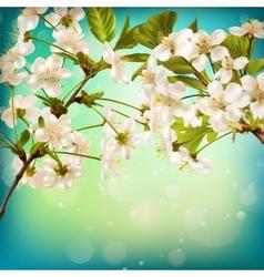 Cherry flower blossom on blue background EPS 10 vector image