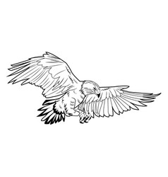 american bald eagle flying wildlife image vector image