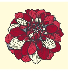 Hand-drawn flower of dahlia vector