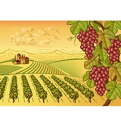 Vineyard valley landscape vector image