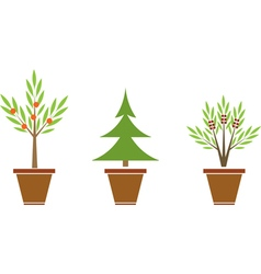 Plants in pots vector