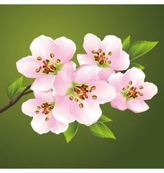 Blossoming sakura japanese cherry tree vector image