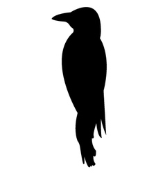 Woodpecker bird silhouette vector