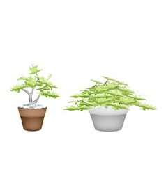 Two bonsai tree in flower pot on white background vector