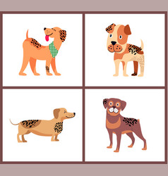 pedigree dogs with unusual fur color and spots vector image vector image