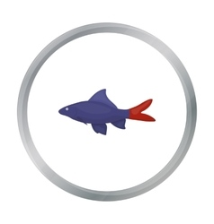 Red tail shark fish icon cartoon singe aquarium vector
