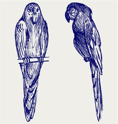 Couple of parrot vector image vector image
