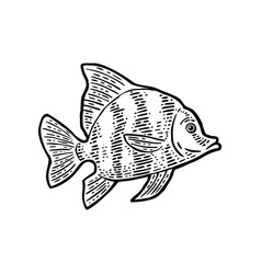 Fish black engraving vintage vector