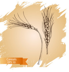Hand drawn cereal crops sketches farm vector