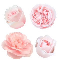 roses set vector image