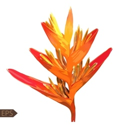 Heliconia colorful isolated flower on a white vector