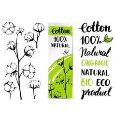 Set of hand draw cotton plant vector