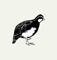Black bird hand drawn vector