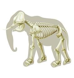 Elephas maximus - skeleton vector