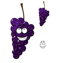 Happy smiling bunch of purple grapes vector image vector image
