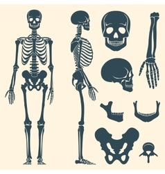 Human bones skeleton silhouette set vector
