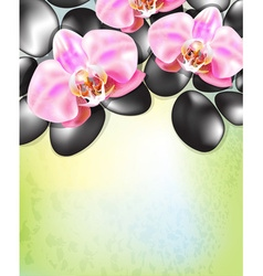 Green spa background with flowers and hot stones vector