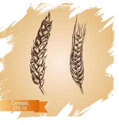 Hand drawn cereal crops sketches farm vector